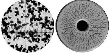 Magnetické prášky